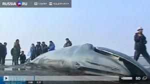 В Шанхае на берег выбросило кита. Кадр из сюжета Russia.ru
