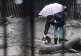 Тигр загрыз смотрителя в шанхайском зоопарке
