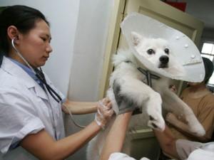 Владельцев собак заставили сделать вакцинацию своим питомцам China Photos/Getty Images